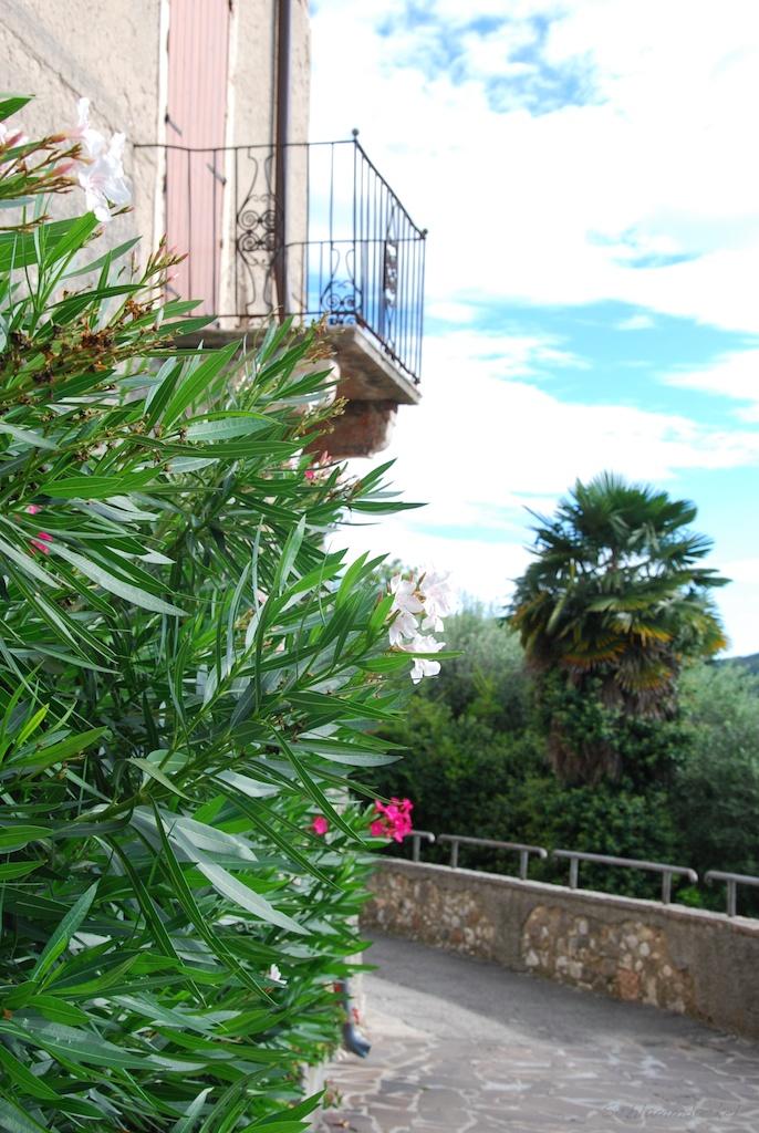 Oleander überall